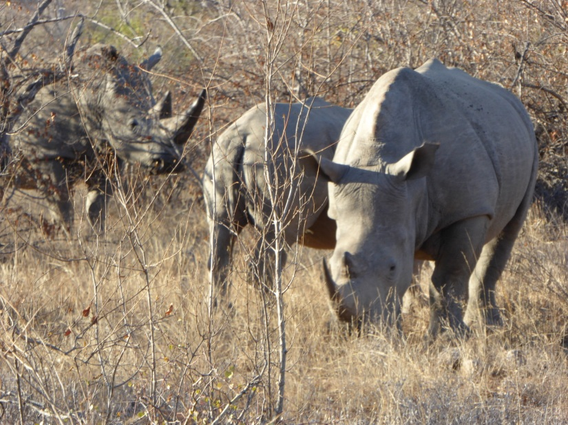 27th July – Greater Kruger Park, South Africa
