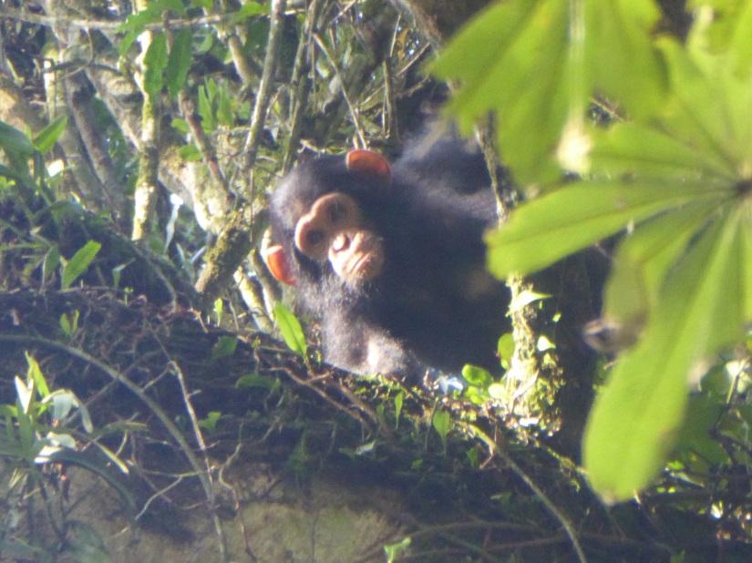 23rd September – Kalinzu Forest Reserve/LakeBunyonyi