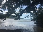 Daintree, where the rainforest meets the ocean